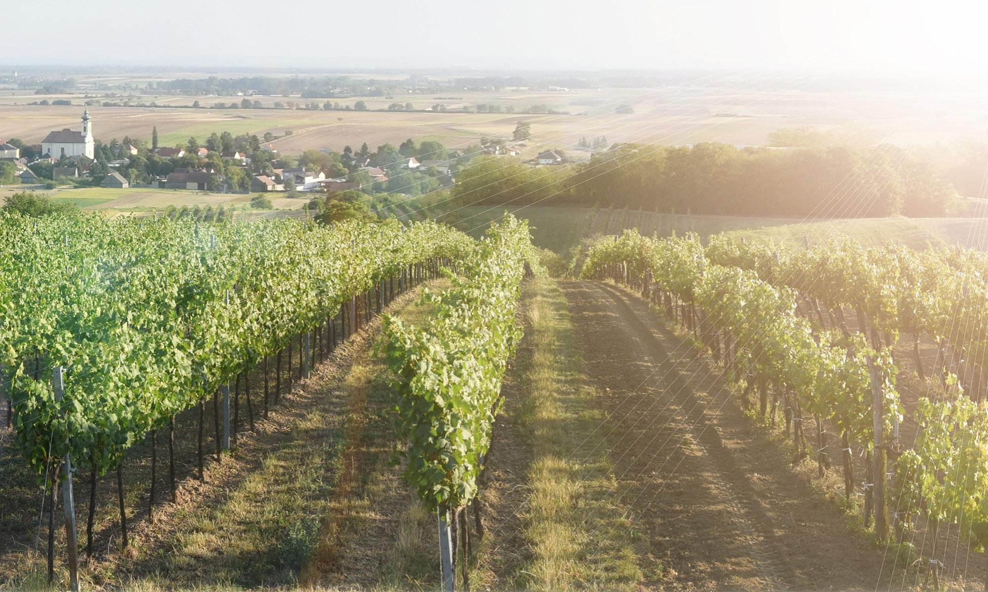 Weinbauverein Ollersdorf